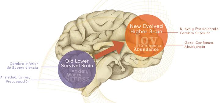 higher brain living espanol
